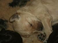 pups-honden-allerlei-001