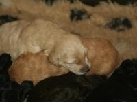 pups-honden-allerlei-005