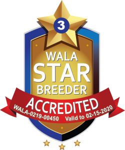 Dutchdoodles WALA Star Logo.3.00450